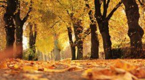 Autumn in Baldwin Park