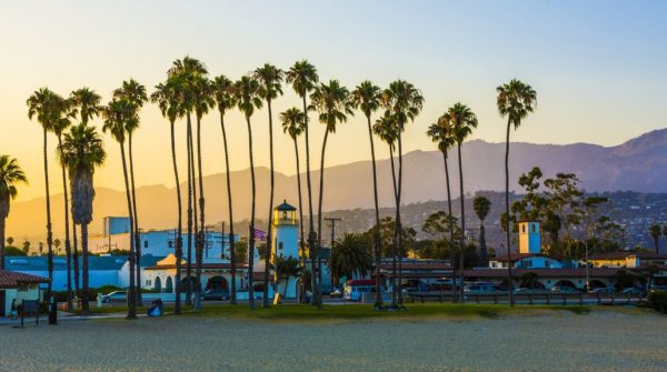 Palm trees in Santa Barbara County